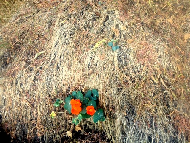 sausalito flower