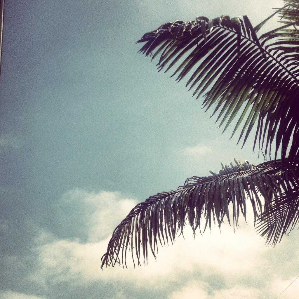 palm tree JBD