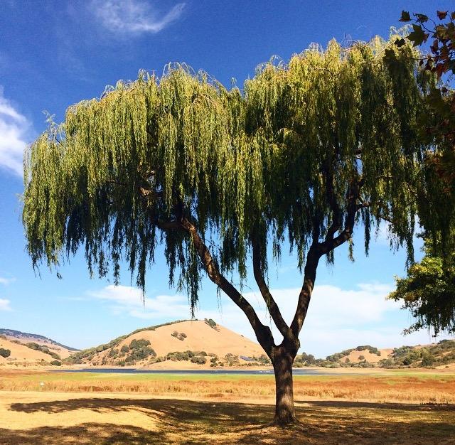 JBD TREE